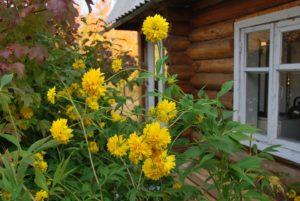 Более четверти россиян проведут летний отпуск на даче